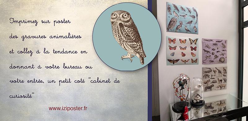 poster gravure animalière
